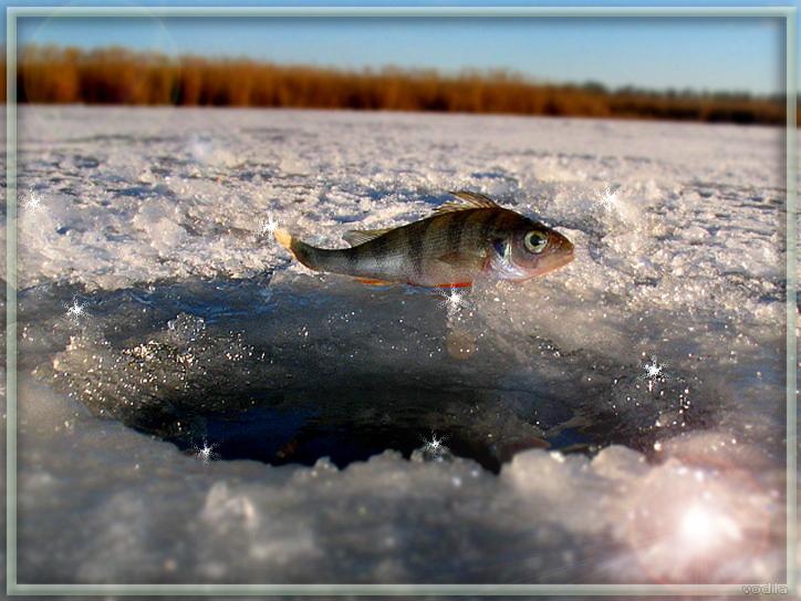 http://images.sevstar.net/images/00464596343188772562.jpg