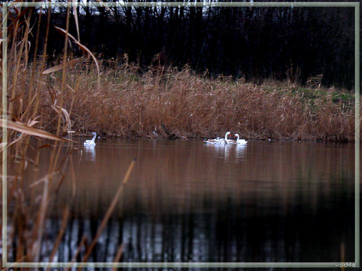 http://images.sevstar.net/images/14497676046420907292.jpg