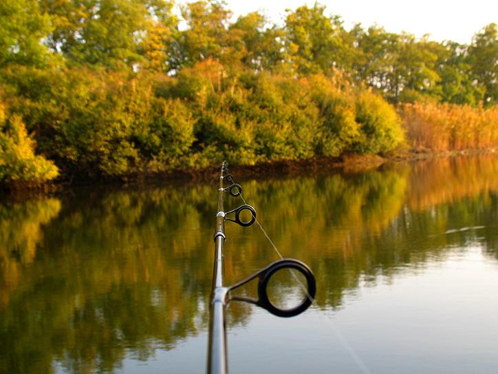 http://images.sevstar.net/images/14818272558343970406.jpg