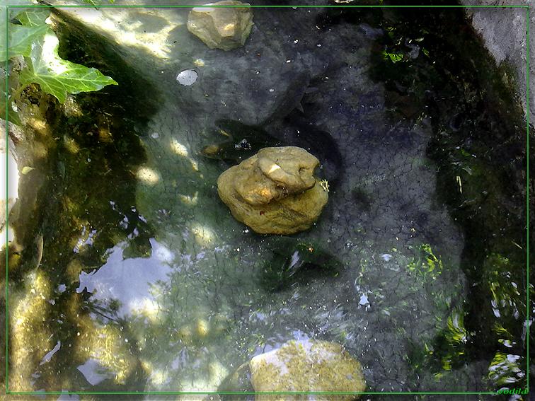 http://images.sevstar.net/images/17960783724062445519.jpg
