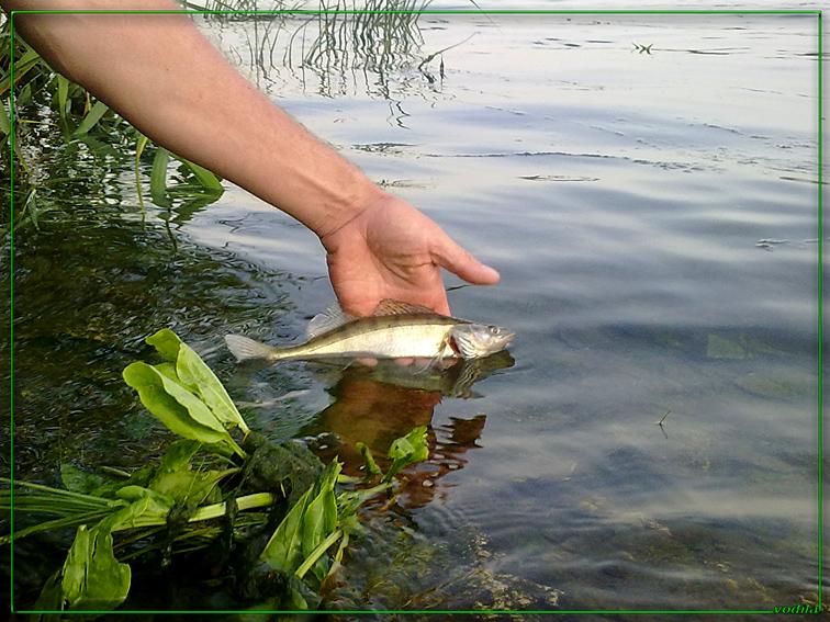 http://images.sevstar.net/images/23464536612757974169.jpg