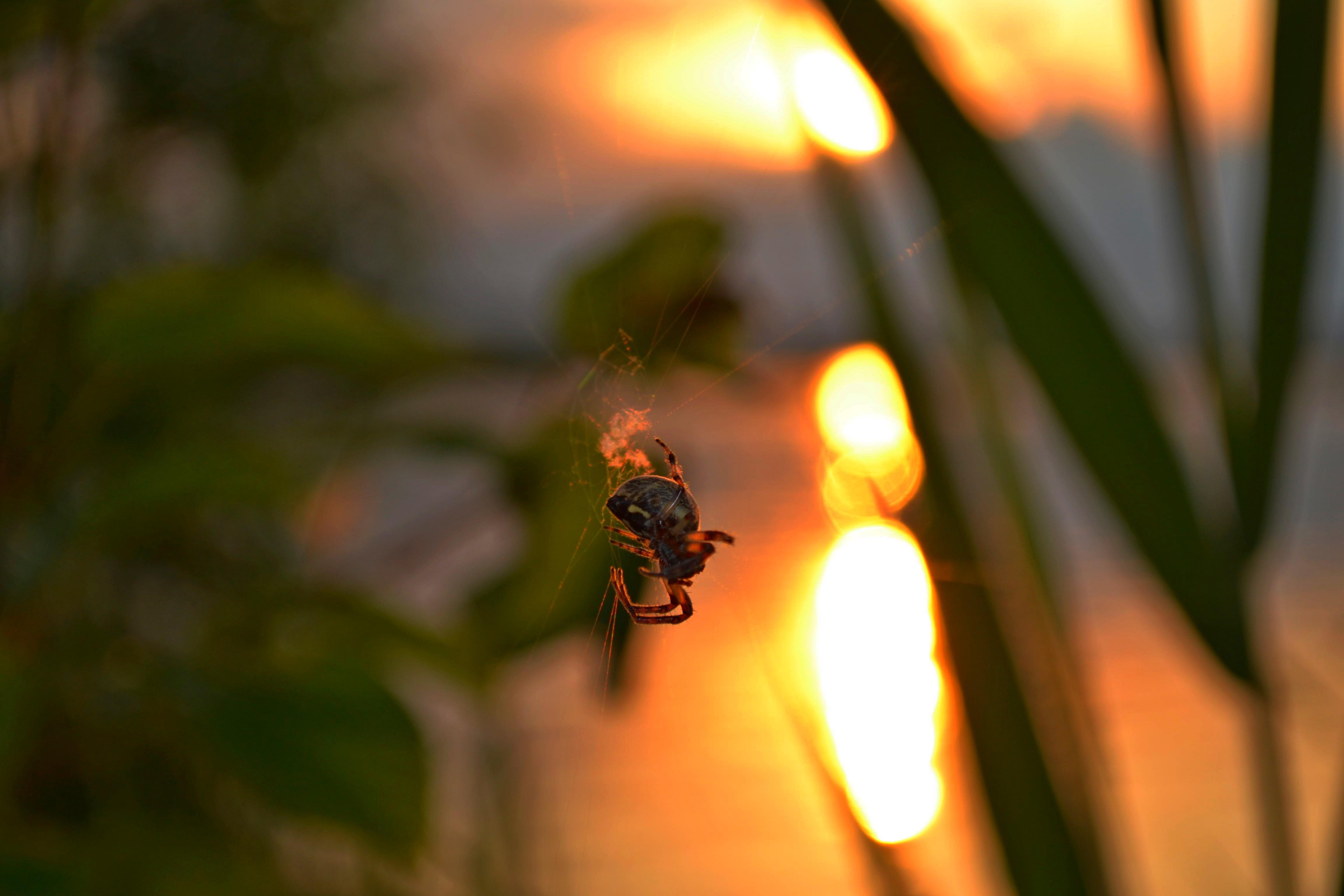 http://images.sevstar.net/images/28529756419184953155.jpg