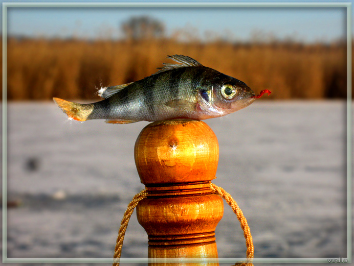 http://images.sevstar.net/images/30352827776933072530.jpg