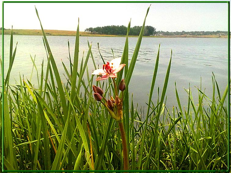 http://images.sevstar.net/images/34327096343499160923.jpg