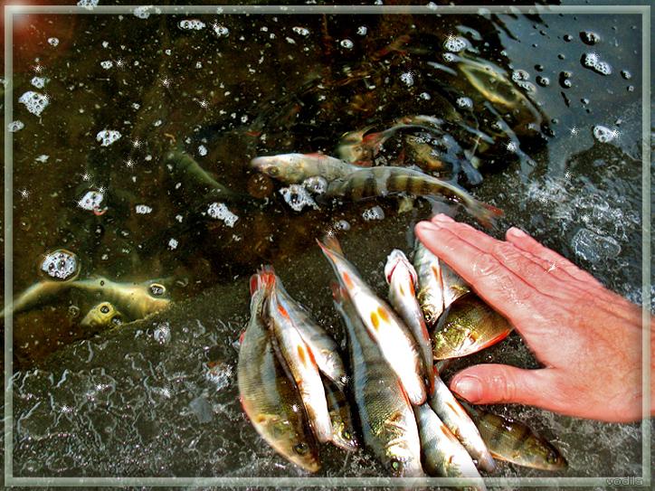 http://images.sevstar.net/images/34534477425464804726.jpg