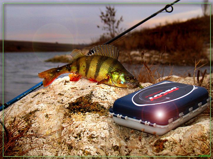 http://images.sevstar.net/images/35490478527707574235.jpg