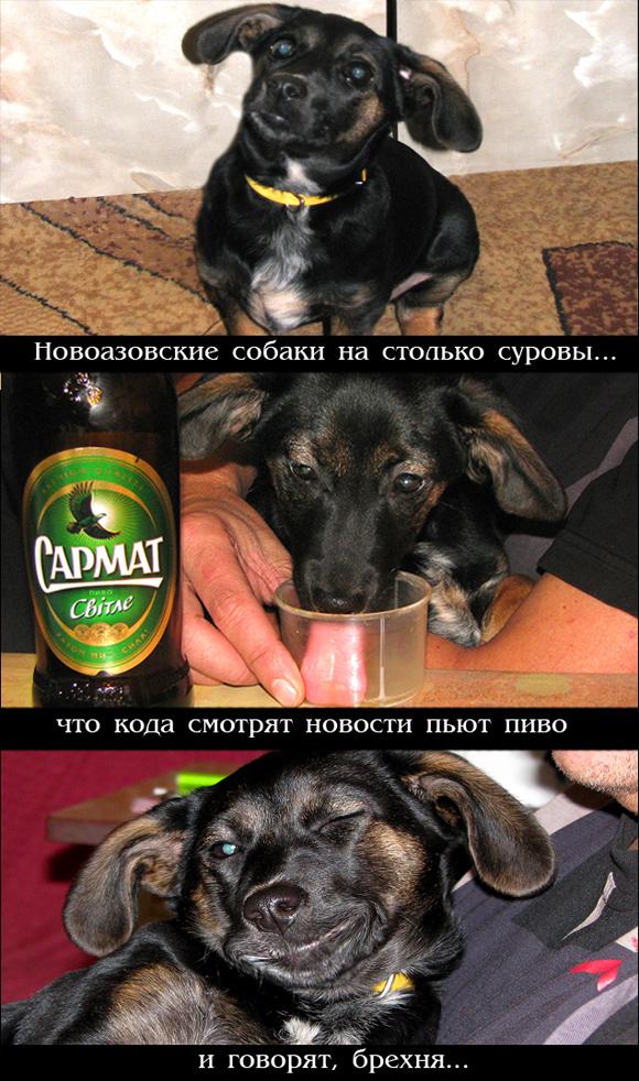 http://images.sevstar.net/images/41109595838152585456.jpg