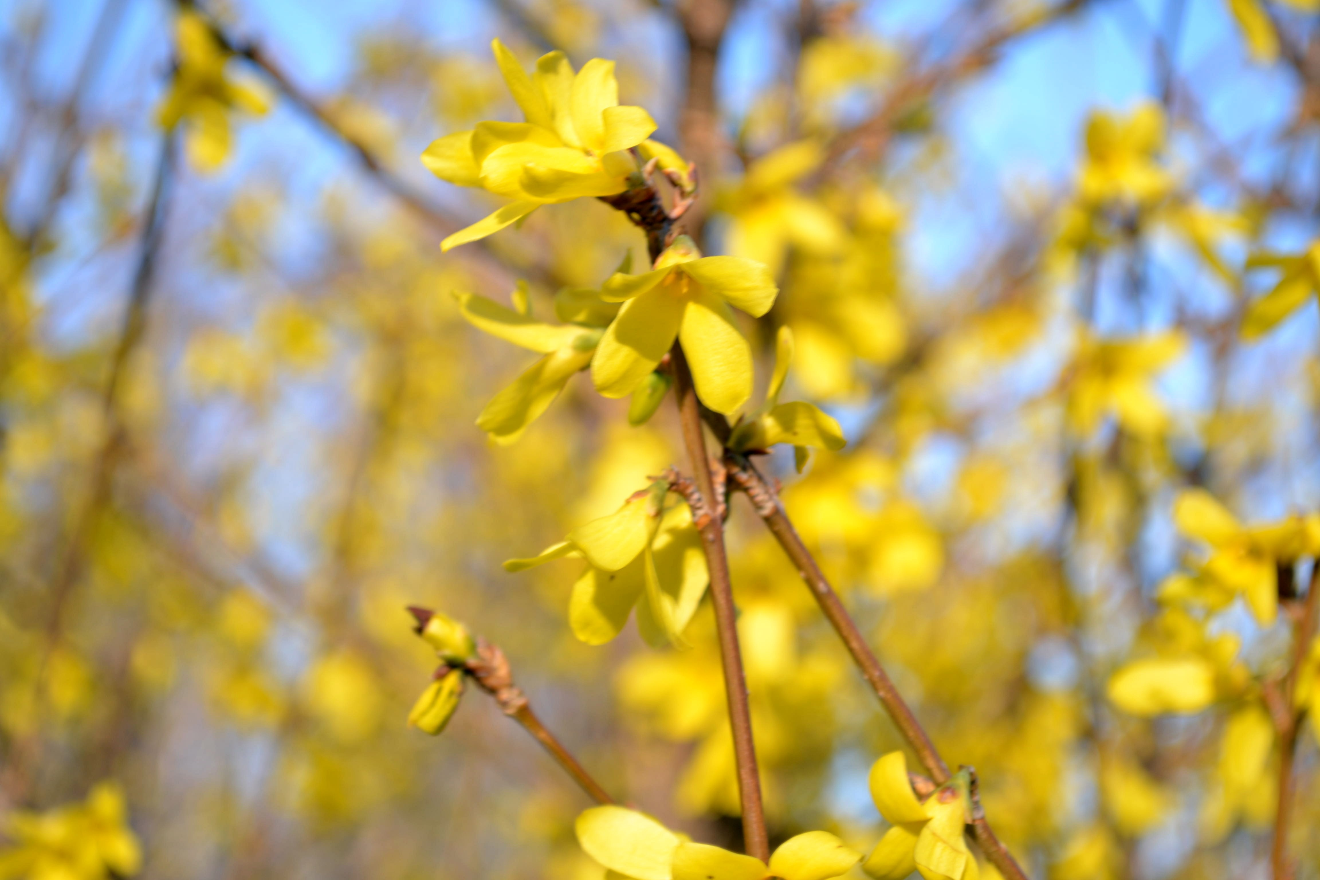 http://images.sevstar.net/images/42403948583209667144.jpg