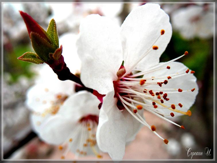 http://images.sevstar.net/images/45167705927739527174.jpg