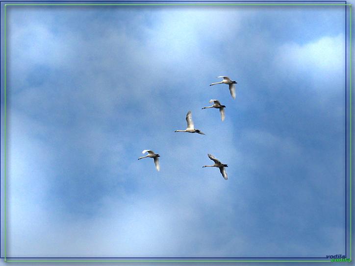 http://images.sevstar.net/images/46955839985171297242.jpg