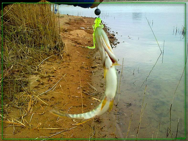 http://images.sevstar.net/images/50382162011068223230.jpg