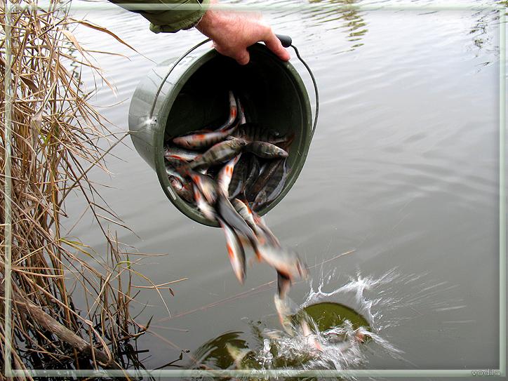 http://images.sevstar.net/images/51295314120950148689.jpg