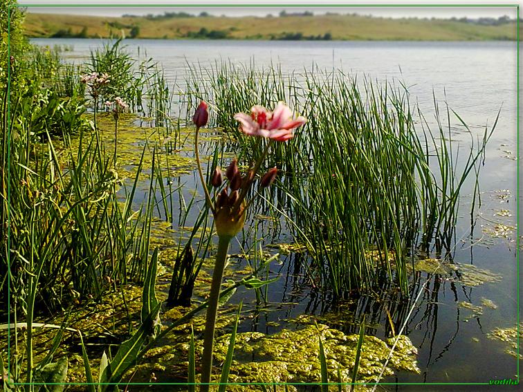 http://images.sevstar.net/images/56393014427256555341.jpg