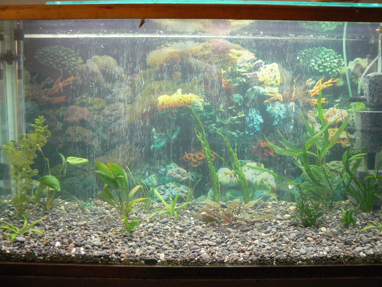 Посадка растений аквариум, правильная посадка аквариумных 50
