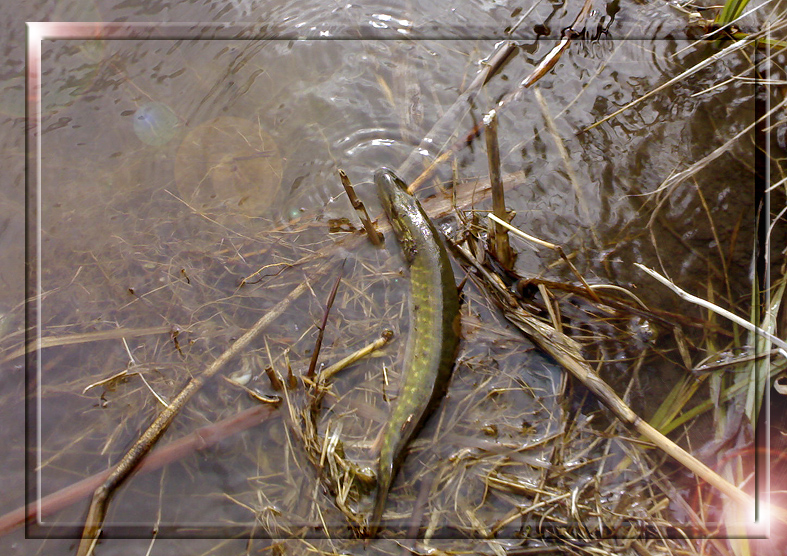 http://images.sevstar.net/images/65980831456740272941.jpg