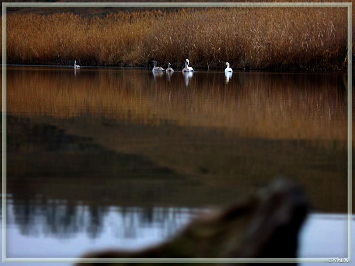 http://images.sevstar.net/images/69760651559139526916.jpg