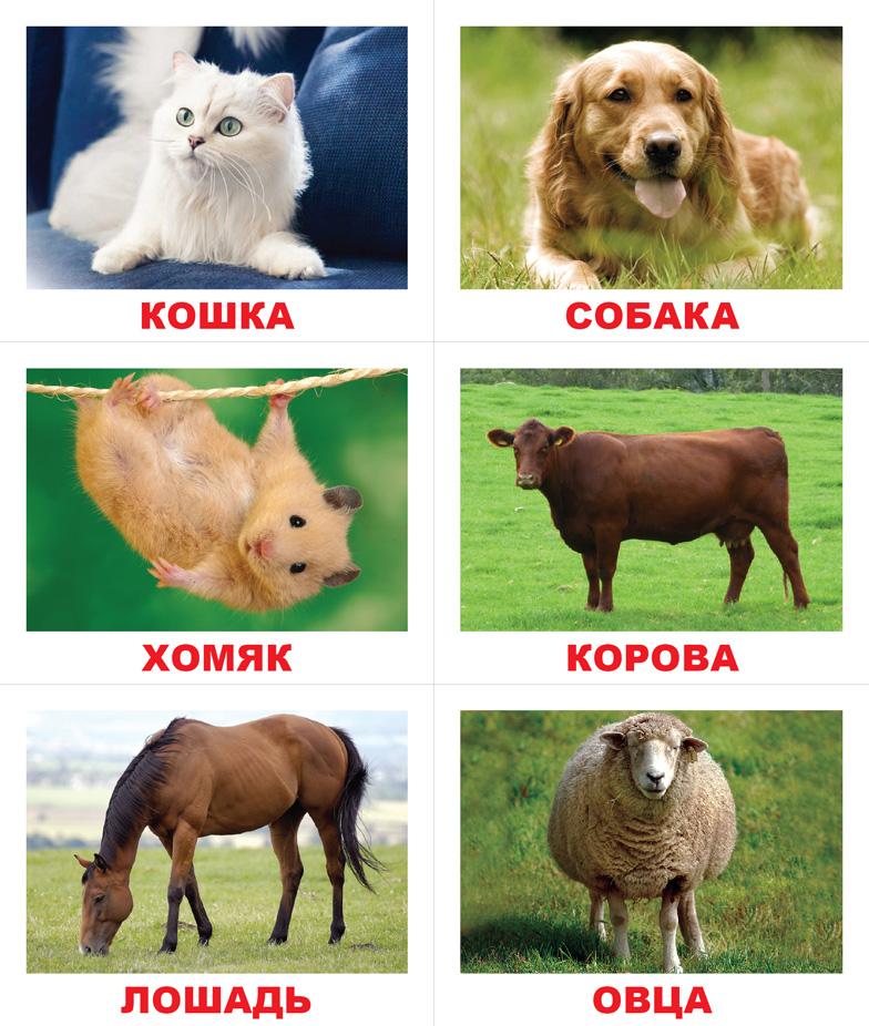 порно русское бесплатно о домашнее