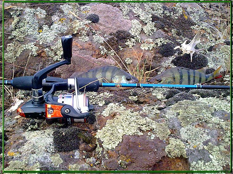 http://images.sevstar.net/images/72271128897564979393.jpg