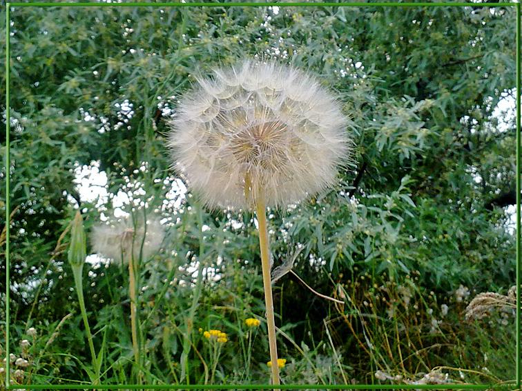 http://images.sevstar.net/images/72419477387922238971.jpg