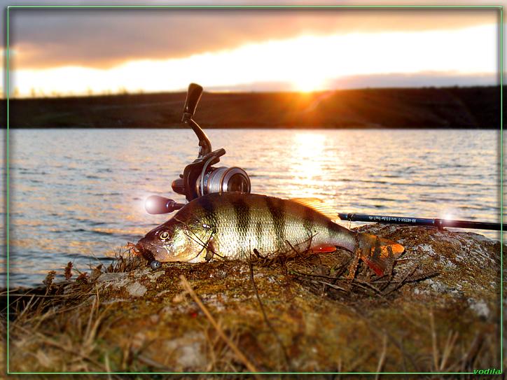 http://images.sevstar.net/images/79543297384032303697.jpg