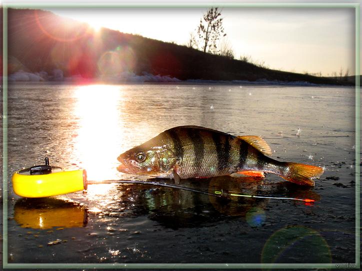 http://images.sevstar.net/images/88324745585332558621.jpg
