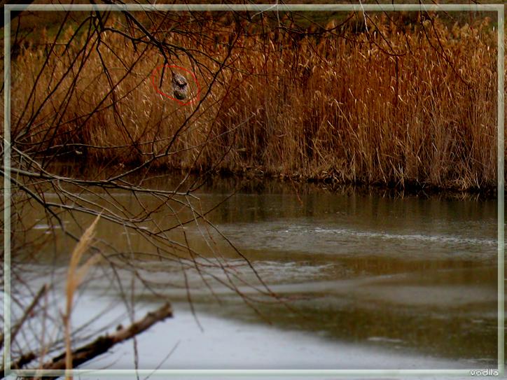 http://images.sevstar.net/images/95150368646324185071.jpg