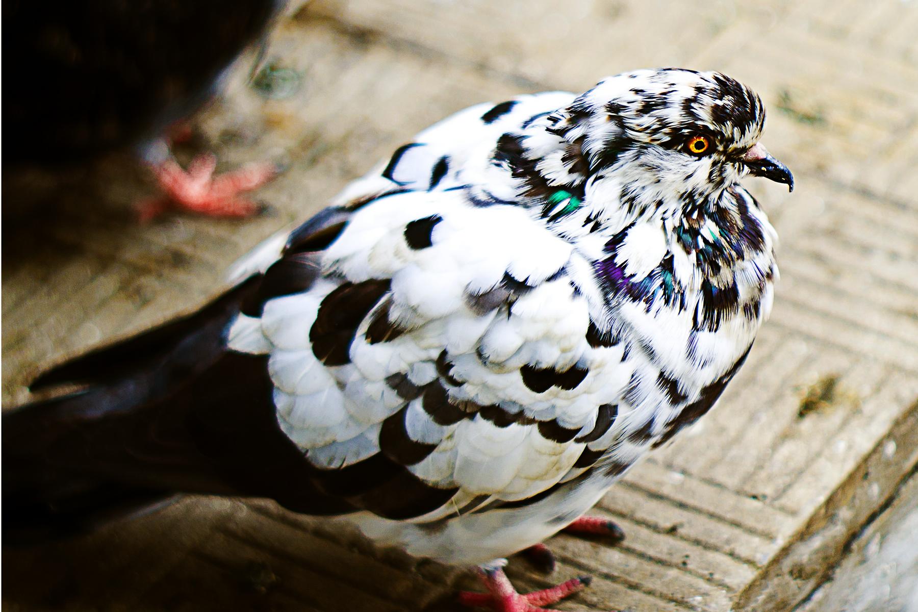 http://images.sevstar.net/images/95275734142474512249.jpg