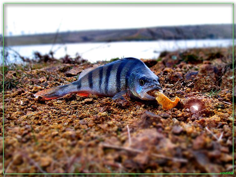 http://images.sevstar.net/images/97509729520794429999.jpg