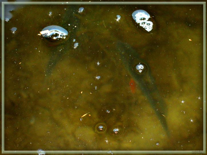 http://images.sevstar.net/images/99621071079128556357.jpg