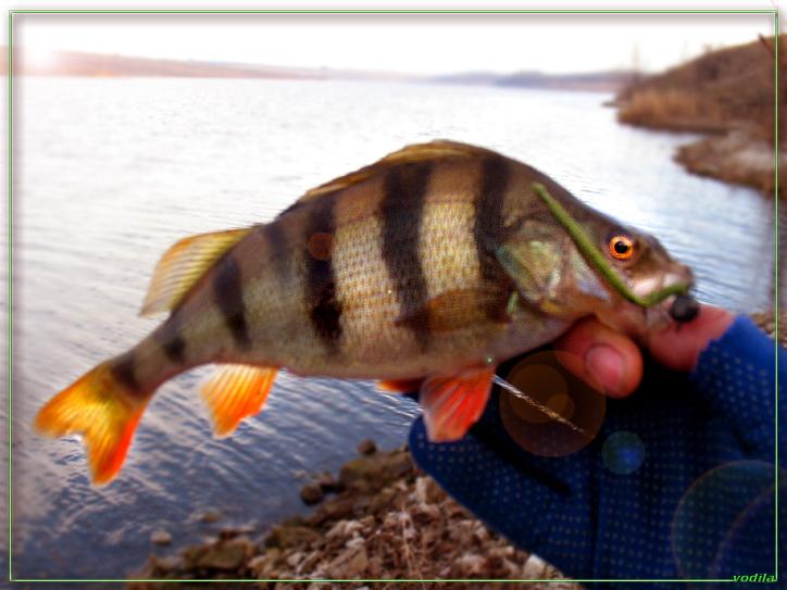 http://images.sevstar.net/images/99977394855475701359.jpg